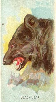 1909 Philadelphia Caramel Zoo Cards (E28) #NNO Black Bear Front