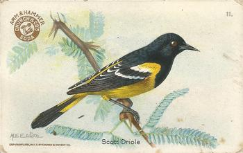 1922 Church & Dwight Useful Birds of America Third Series (J7) #11 Scott Oriole Front