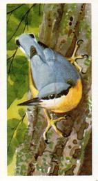 Image result for brooke bond nuthatch