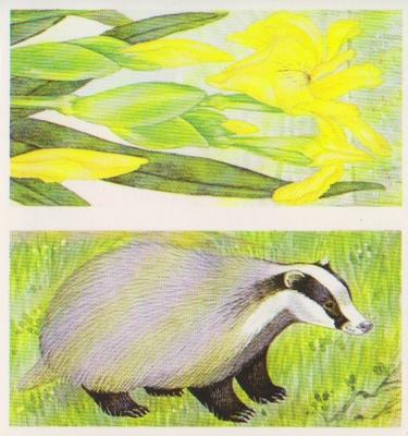 1990 Brooke Bond A Journey Downstream (Double Cards) #9-10 Yellow Flag / The Badger Front