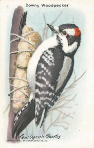 1936 Church & Dwight Useful Birds of America Ninth Series (J9-5) #7 Downy Woodpecker Front