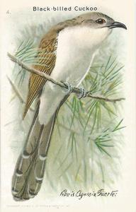 1938 Church & Dwight Useful Birds of America Tenth Series (J9-6) #4 Black-billed Cuckoo Front