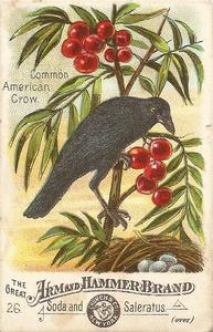 1886 Beautiful Birds of America (J1) #26 Common American Crow Front