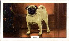 1938 Gallaher Dogs Series 2 #10 Pug Front