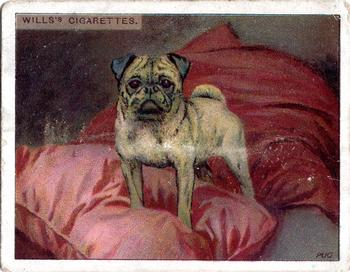 1915 Wills's Dogs Second Series #18 Pug Front