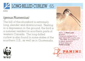 1992 Panini Wildlife In Danger #65 Long-Billed Curlew Back