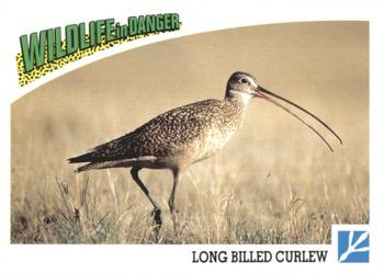 1992 Panini Wildlife In Danger #65 Long-Billed Curlew Front