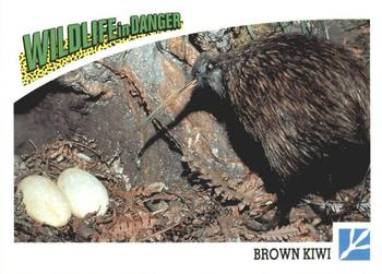 1992 Panini Wildlife In Danger #72 Brown Kiwi Front