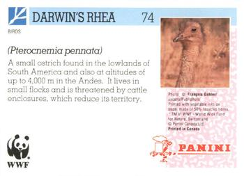 1992 Panini Wildlife In Danger #74 Darwin's Rhea Back