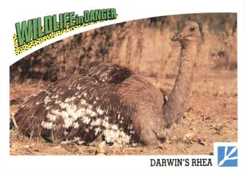 1992 Panini Wildlife In Danger #74 Darwin's Rhea Front